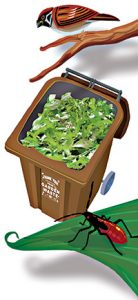 Green Waste Lewisham Picture